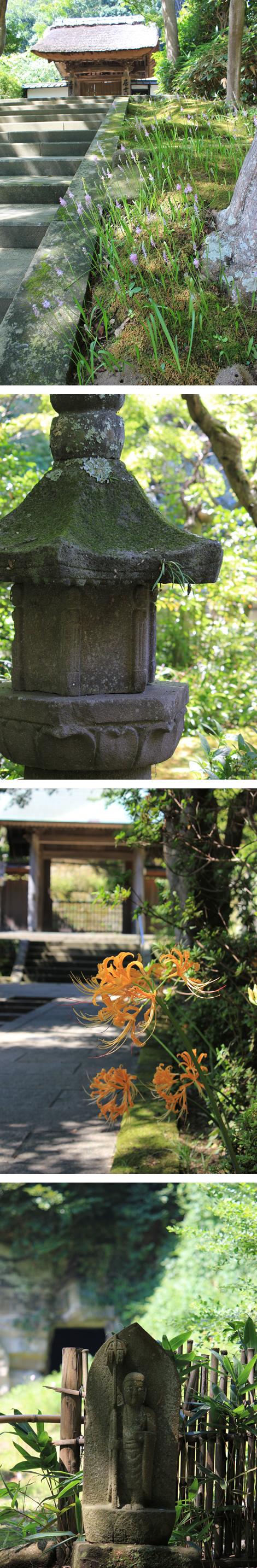 2011_nature_kita Kamakura